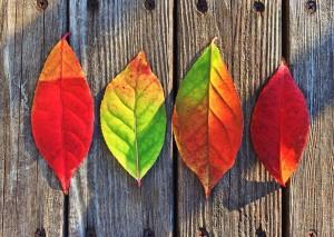 Fall Medicine Wheel