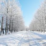 Winter Medicine Wheel